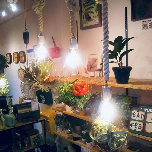 フェイクグリーンと照明がコラボレーションした個性的な照明が入荷しました植物を楽しむために開発された照明で、熱を持たないLED電球を採用し植物に優しいのが特徴。フェイクグリーンの演出が気軽に出来るようにと画像の解説書も一緒についているので初心者でも安心してフェイクグリーンを取り扱えますサイズはMとLの2種類。ロープ状のコードは結ぶことで長さの調節が可能です是非、立川店にてご覧くださいそして明日2月19日(火)はららぽーと立川立飛店は休館日となります。20日(水)からは通常営業となります。ご来店お待ちしております。#BICASA#ららぽーと#照明#グリーン#個性的#おしゃれ#ペンダント# ボタニック#LED