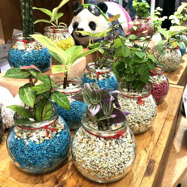 カラーサンドで植えこんだ小さなボトルグリーンお気に入りの色を選んだり、お部屋の雰囲気に合わせてカラフルに並べても楽しいインテリアグリーン。日光を必要とせず、数日に一度の水やりで保たれるのでお手入れが簡単植物を育てたことがない方でも気軽に楽しんで頂けます大きさもほぼ変わらないので、お部屋にワンポイント与えてくれるアイテムとしてとっても優秀です数量に限りがありますので、是非お早めに!立川店にてお待ちしております#bicasa #ビカーサ #bicasa立川 #ビカーサ立川 #ららぽーと立川立飛 #ららぽーと立川 #ヴィンテージインテリア #ヴィンテージスタイル #西海岸 #西海岸インテリア #西海岸スタイル #西海岸テイスト #カリフォルニアスタイル #カリフォルニアハウス #カリフォルニアインテリア #インダストリアル #インダストリアルインテリア #インダストリアルスタイル#グリーン#インテリアグリーン#雑談#おしゃれ雑貨#ワンポイントアイテム#植物#デスク